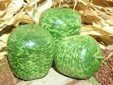 SPECKLED APPLE GOURD YOU CAN CREATE GREAT CRAFT PROJECTS USE YOUR IMAGINATION