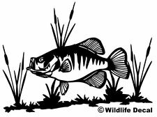 Crappie And Cattail Decal Fishing Vinyl Window Sticker For Boats / Trucks