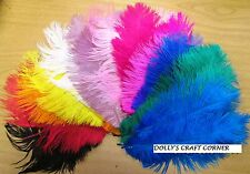 "Ostrich Feathers Pack of 10 (Approx 8""-11"" Long) Beautiful colours"
