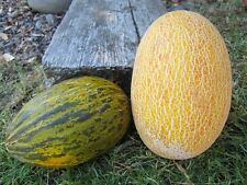 ANNE ARUNDEL, PERSIAN & HAMI MELONS 20 SEEDS TAKE YOUR CHOICE - ALL HARD TO FIND