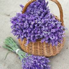 Lavender vera English (100, 200 = 3200 seeds) organic non gmo USA herb butterfly