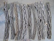 "10 PCS 8""L ORGANIC UNTREATED Cholla Cactus Wood Aquarium Decoration Crafts Chews"