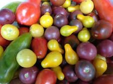 Organic Heirloom Cherry Tomato Collection save on individual shipping
