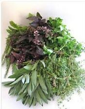 Organic Heirloom Herb-Vegetable Seeds  Perennial & Annual  2014 Different Kinds!