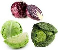 ORGANIC Heirloom Cabbage Vegetable Seeds 10 VARIETGmo to choose from Non-Gmo