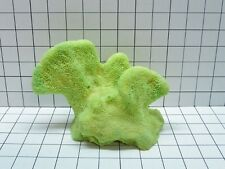 Large Cat's Paw Coral Decoration #716 made to order **$50 minimum order