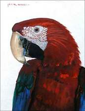 Ceramic Accent & Decor Tile White Red Parrot Tropical Bird Wildlife Art JWA031AT