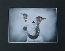 Mounted Print * GREYHOUND, WHIPPET & LURCHER * 9 images to choose from *