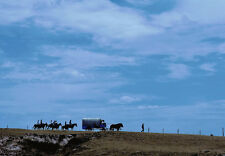 Art print POSTER Horses and Covered Wagon Crossing Prairie
