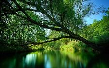 Stunning Green Forest Trees Landscape Wall Art Various Size Canvas Prints