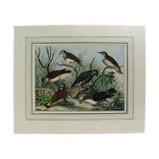 Covetable Group of Birds Hand Colored Lithograph Circa 1890s