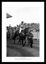 Sea Pigeon 1981 Cheltenham Champion Hurdle Horse Racing Photo Memorabilia (364)