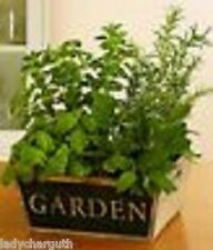 13 Types Herb Seed You Choose Basil Catnip Dill Feverfew Rosemary Parsley Sage