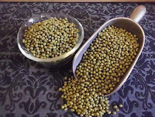 ORGANIC MUNG BEAN SEEDS approx 5000 SPROUTING SEEDS or 3 Pack SPROUTING LIDS