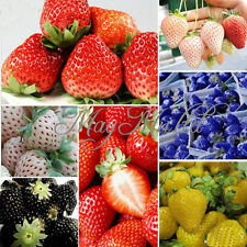 100 PCS Strawberry Seeds Nutritious Delicious Blue Black Fruit Vegetables Seed J