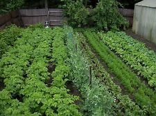 Complete Selection of Cool Season Vegetable seeds cabbage greens lettuce variety