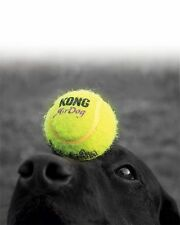 Kong Airdog Non-abrasive Squeaker Balls Dog Fetch Pet Toy tennis Ball