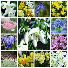 SNOWDROP BULBS / BLUEBELLS / MINIATURE DAFFODILS / ALLIUM /