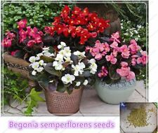 Begonia Flower seed Home Garden flower bed Plant Seeds Potted bonsai 10 pcs /bag