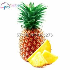 100pcs Pineapple Sweet Juicy Delicious Fruit Seeds Rare Exotic Bonsai Potted Gif