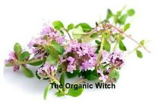 ORGANIC THYME RED Essential Oil *Buy 3 Get 1 FREE Pure certified therapeutic