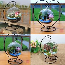 Hängende Glasvasen-Betriebshalter Terrarium Container-Standplatz-Home Decoration