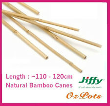 10 to 15mm Natural Bamboo Cane - Multi Purpose, Trellis, Climbers, Garden Stakes