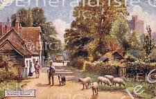 Bedfordshire Northill Village Old Photo Print - Size Selectable - England