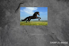 Horse CANVAS PRINT FRAMED or ROLLED choose size A2,A1,A0