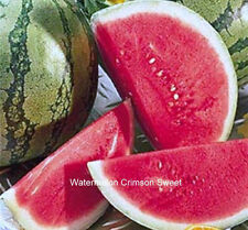 Watermelon Crimson Sweet  Non GMO Heirloom Seeds