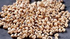 Variety Pack   8 Bean Type x 15 seeds Each Item Listed NON GMO Vegetable Seeds