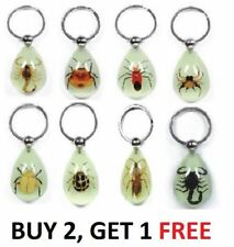 Real Insect Key Ring Chain Luck Charm Scoprion Spider Beetle Wasp Bug Specimen