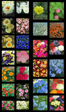 Hanging  Basket or Patio Pot. Mixed Seed Collections. Individually labelled