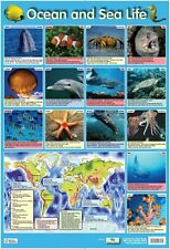 New Ocean and Sea Life Sea Creatures Mini Poster