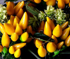 CHILI PEPPER ORNAMENTAL GOLDFINGER Capsicum Annuum Bulk Seeds