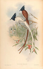 New Vintage John Gould Art Print or Poster #5 Repro Birds Giclee Archival Inks