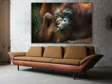 Giant canvas print, Orangutan Canvas, Framed, Gallery wrapped, rolled, wall art