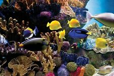 Tropical Fish & Coral Poster 61 x 91.5cm