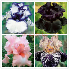 50pcs rare iris ,iris seeds,bonsai flower seeds,24 colours, Heirloom Iris Tec...