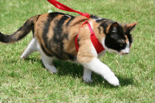 Cat harness with connections for lead- To walk your cat.