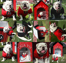 "Georgia Bulldogs UGA dog mascot NCAA College Football Photo 11""x14"" 12 CHOICES"