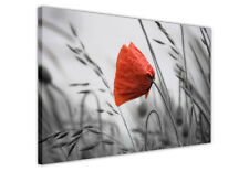 BLACK AND WHITE CANVAS WALL ART PRINTS RED POPPY FLOWER PICTURES PHOTOS FLORAL