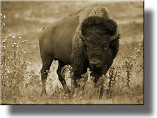 On Wood: American Buffalo Picture, Made on Wood, Wall Art Décor, Ready to Hang!