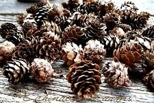 SCENTED MINI PINE CONES * 8 CUPS * POTPOURRI PRIMITIVE BOWL FILLER FIXINS