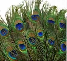 Wholesale Beautiful Natural Peacock Tail Feathers 10-12inch For DIY Decoration