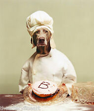 "WILLIAM WEGMAN 'B is for Baker', 2012 Limited Edition Color Photograph 24"" x 20"""