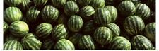 Poster Print Wall Art entitled Watermelons Eger Eastern Hungary