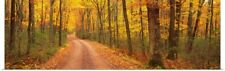 Poster Print Wall Art entitled Path Hickory Run State Park PA