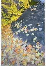 Poster Print Wall Art entitled Fallen Autumn Color Maple Tree Leaves On Wet Rock