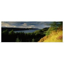 Poster Print Wall Art entitled Trees on a landscape Loch Ness Farigaig Forest